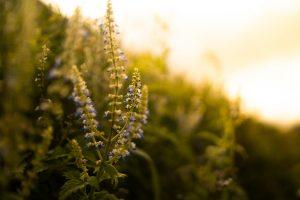 Avantages d'une lampe solaire de jardin